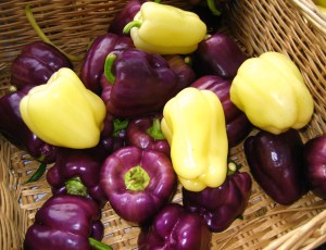 purple and blushing bauty sweet peppers