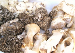 Mushrooms 2